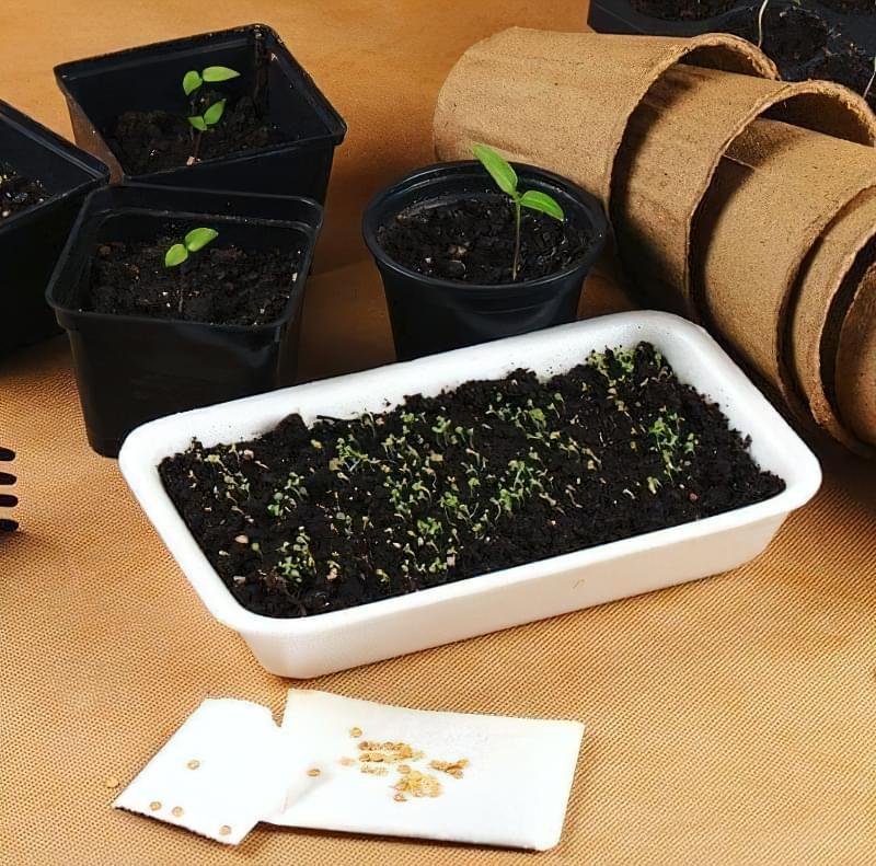 Що таке іонітопоніка і як використовується технологія при вирощуванні розсади 2