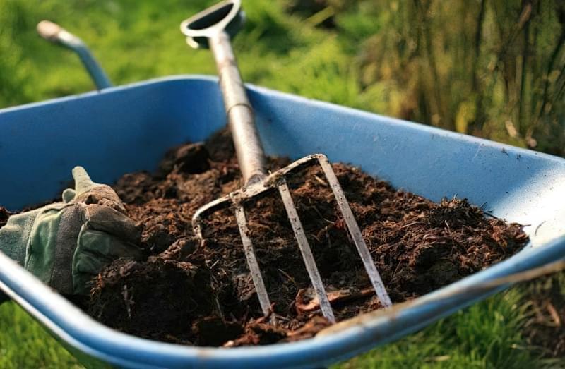 Як і коли посадити редис у відкритий грунт навесні 2