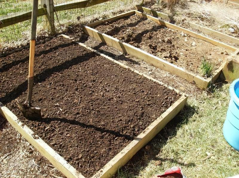 Як і коли посадити редис у відкритий грунт навесні 3