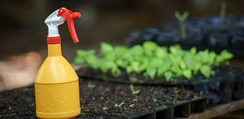 Як вберегти рослини від заморозків навесні 6