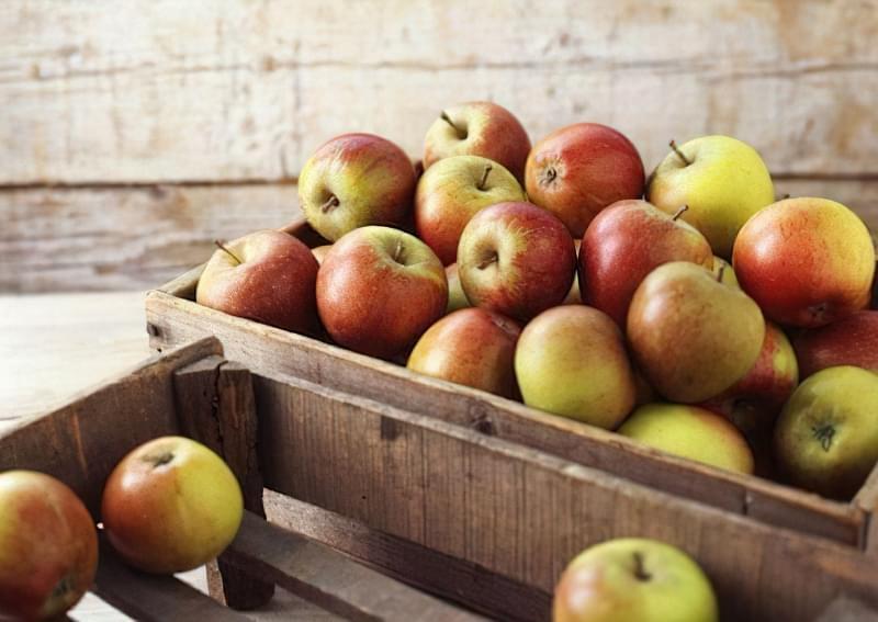 Як зберігати яблука щоб довго не псувались 2