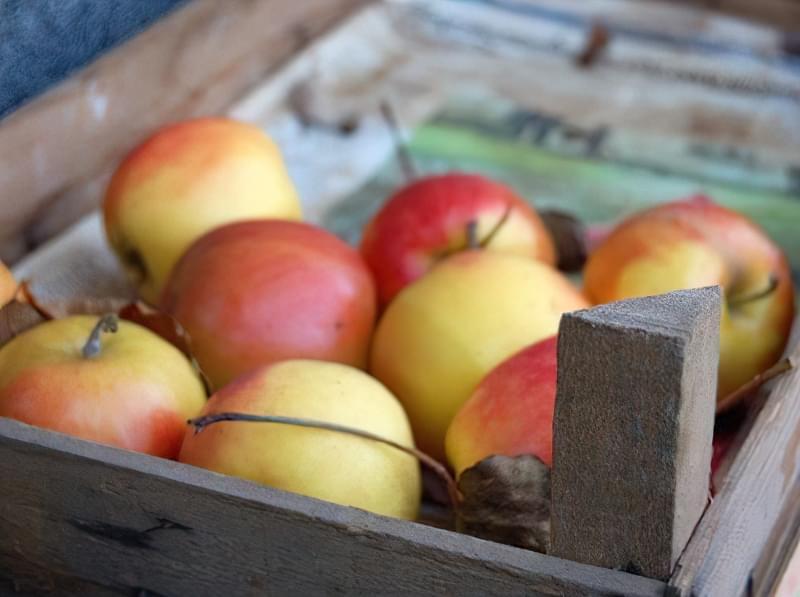 Як зберігати яблука щоб довго не псувались 3