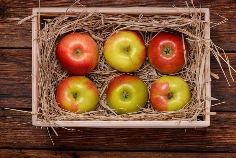 Як зберігати яблука щоб довго не псувались 4