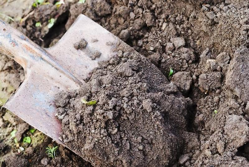 Чотири причини не поспішати з весняним прибиранням в саду 2