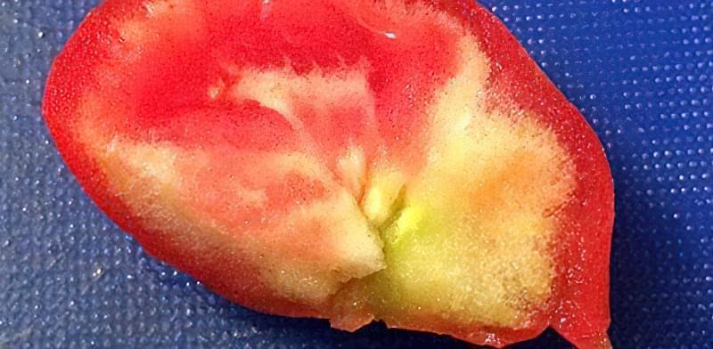 Чому всередині у помідорів білі жорсткі прожилки або тверда серцевина 3