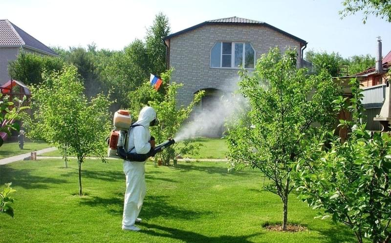 Всі способи позбавлення від комарів на ділянці 4