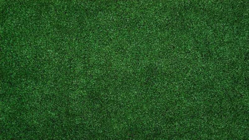 Як правильно садити газон навесні: терміни і технологія посадки 2