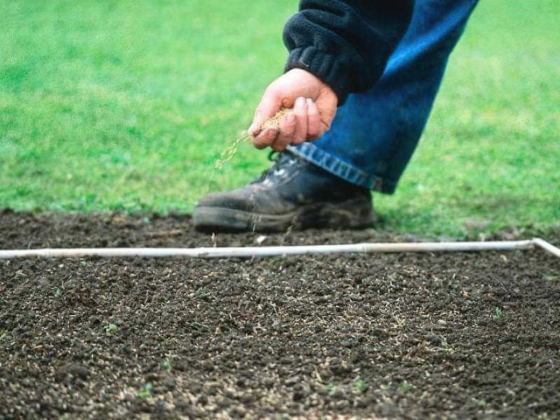 Як правильно садити газон навесні: терміни і технологія посадки 11