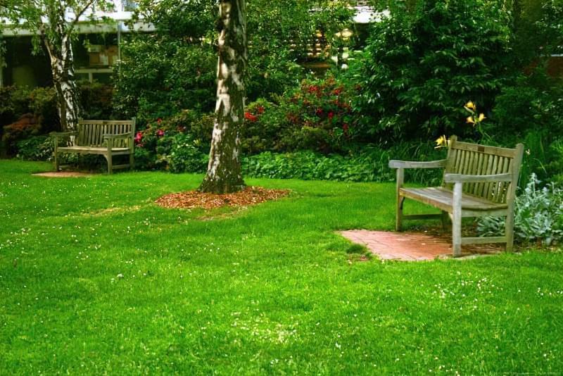 Як правильно садити газон навесні: терміни і технологія посадки 4