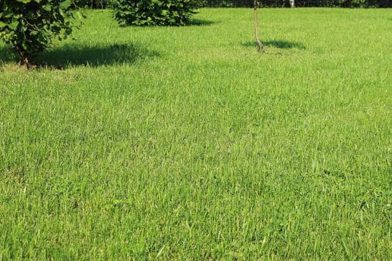 Як правильно садити газон навесні: терміни і технологія посадки 5
