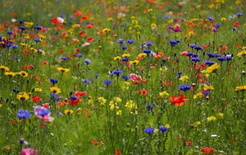 Як правильно садити газон навесні: терміни і технологія посадки 6