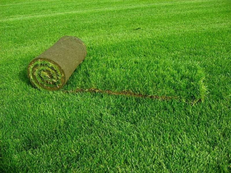 Як правильно садити газон навесні: терміни і технологія посадки 7