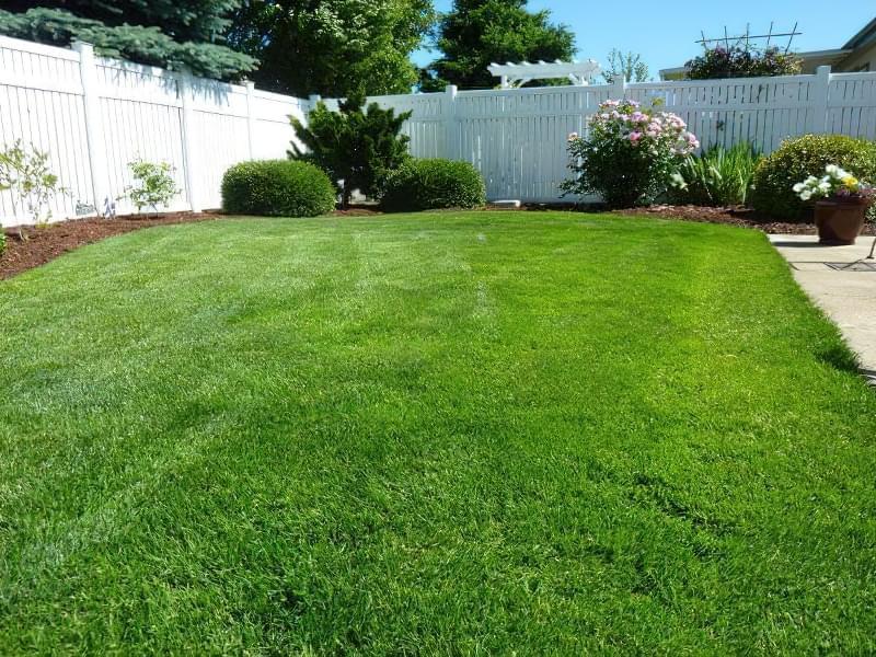 Як правильно садити газон навесні: терміни і технологія посадки 8