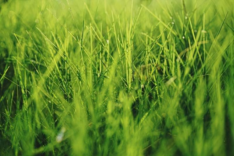 Як правильно садити газон навесні: терміни і технологія посадки 1