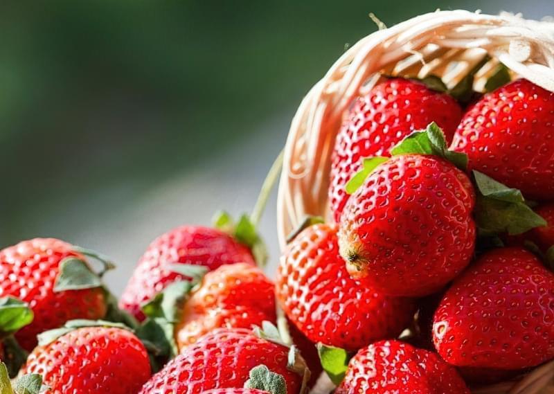 Кращі сорти полуниці для України 5