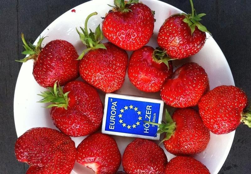 Кращі сорти полуниці для України 8