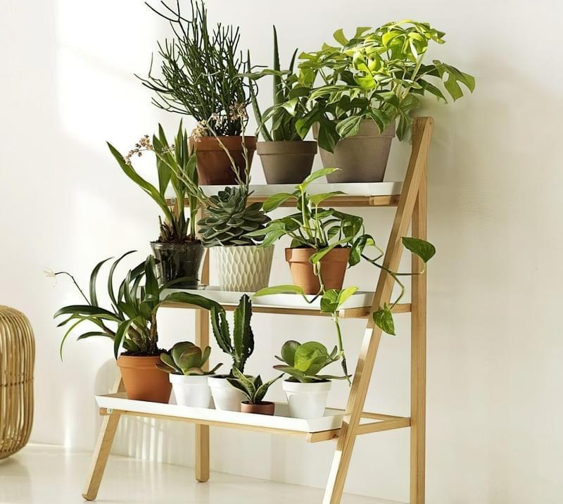 Стелажі і полиці для кімнатних рослин: види та приклади 4