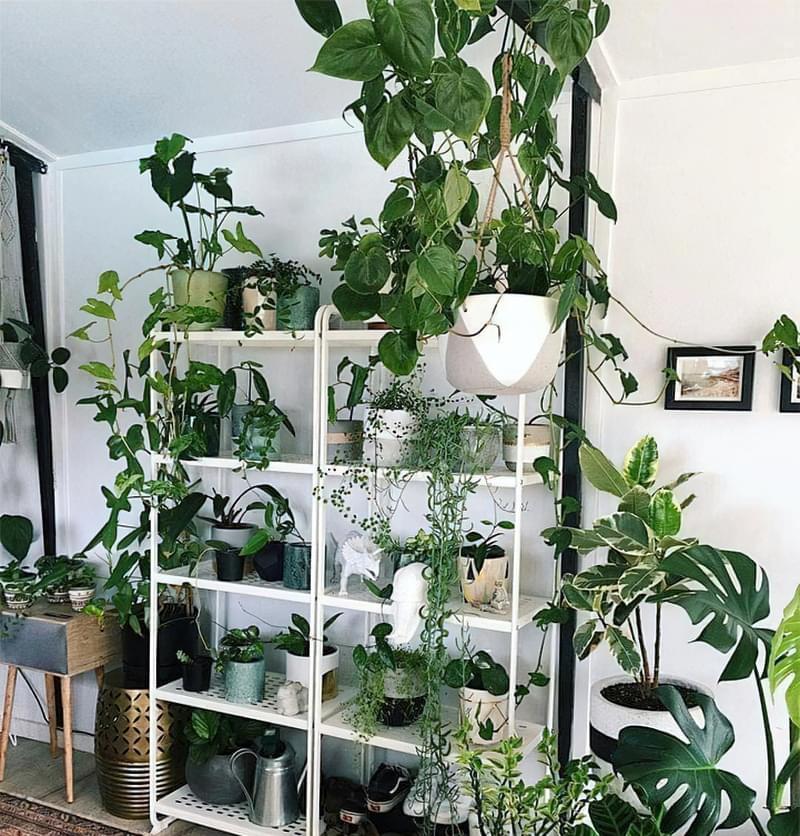Стелажі і полиці для кімнатних рослин: види та приклади 6