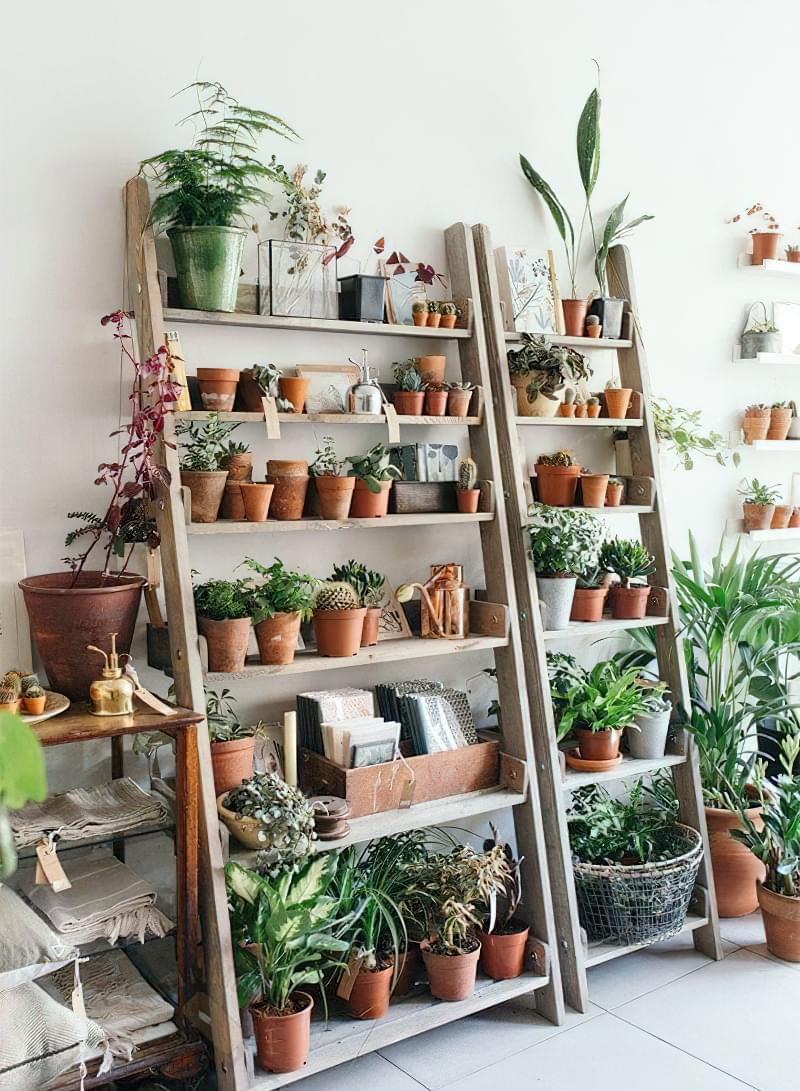 Стелажі і полиці для кімнатних рослин: види та приклади 7
