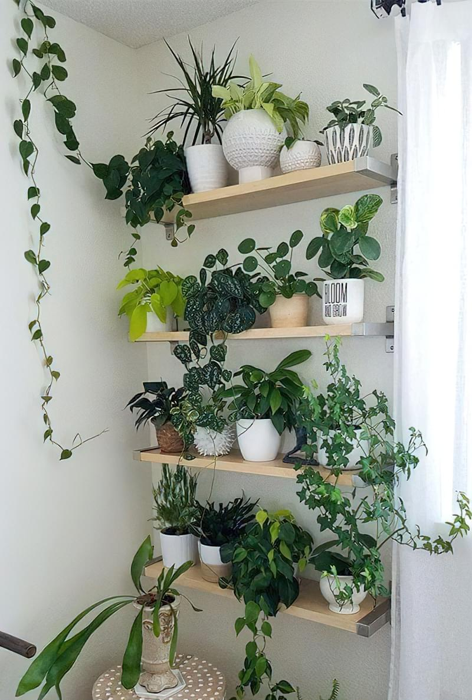 Стелажі і полиці для кімнатних рослин: види та приклади 8