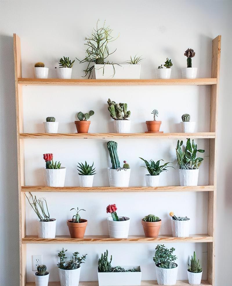 Стелажі і полиці для кімнатних рослин: види та приклади 9