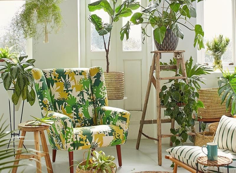 Стелажі і полиці для кімнатних рослин: види та приклади 1