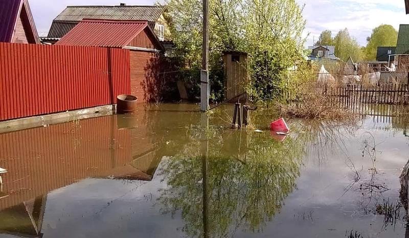 Затоплення ділянки: як врятувати рослини 2
