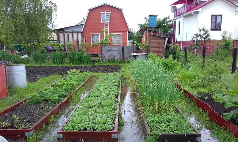 Затоплення ділянки: як врятувати рослини 4
