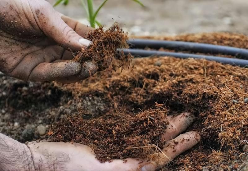 Затоплення ділянки: як врятувати рослини 7