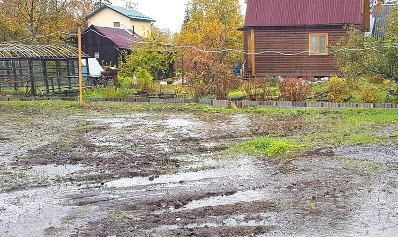 Затоплення ділянки: як врятувати рослини 1