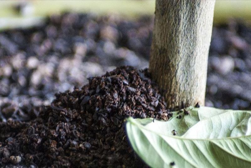 Як можна використовувати кавову гущу в саду і на городі 2