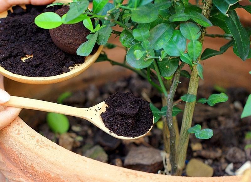 Як можна використовувати кавову гущу в саду і на городі 4