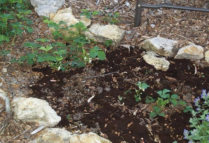 Як можна використовувати кавову гущу в саду і на городі 7