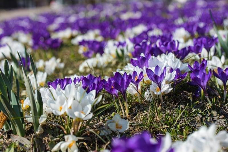 Красиві польові і лугові квіти: жовті, білі, сині, рожеві, фіолетові 14