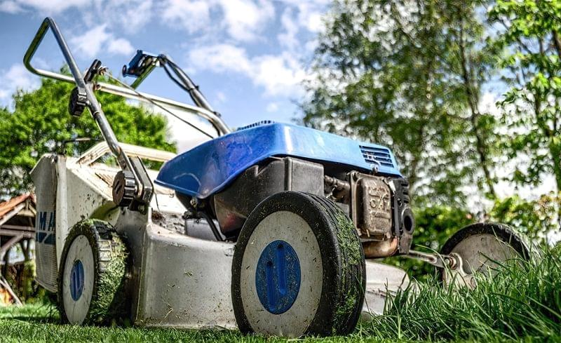 Головні помилки в садівництві 5