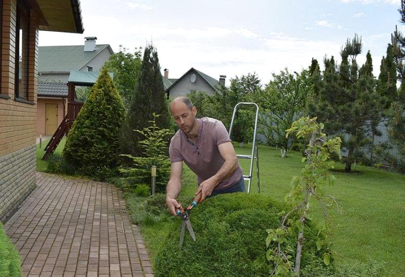 Головні помилки в садівництві 6