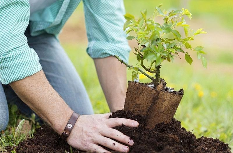 Головні помилки в садівництві 1