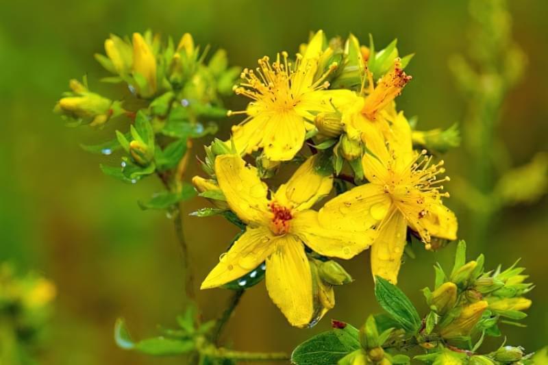 Красиві польові і лугові квіти: жовті, білі, сині, рожеві, фіолетові 3