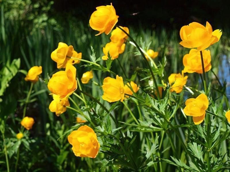Красиві польові і лугові квіти: жовті, білі, сині, рожеві, фіолетові 4