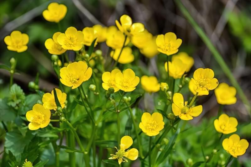 Красиві польові і лугові квіти: жовті, білі, сині, рожеві, фіолетові 5