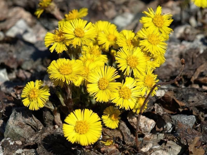 Красиві польові і лугові квіти: жовті, білі, сині, рожеві, фіолетові 7