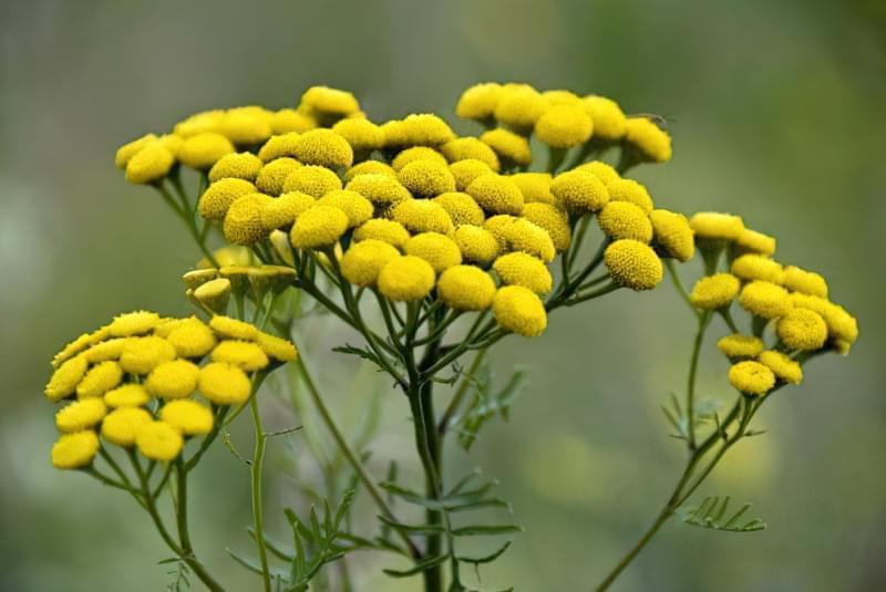 Красиві польові і лугові квіти: жовті, білі, сині, рожеві, фіолетові 9