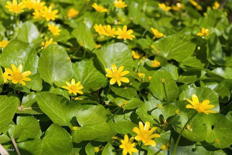 Красиві польові і лугові квіти: жовті, білі, сині, рожеві, фіолетові 10