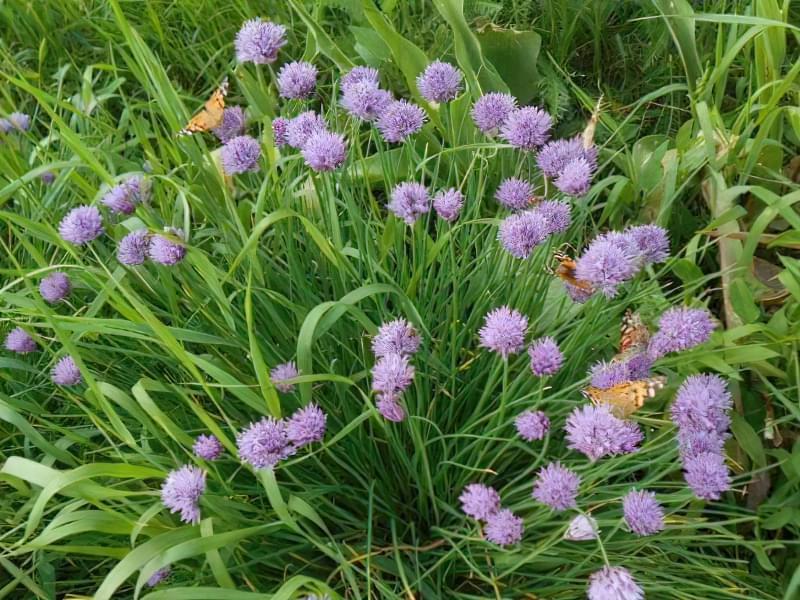 Красиві польові і лугові квіти: жовті, білі, сині, рожеві, фіолетові 33