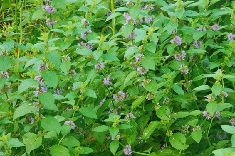 Красиві польові і лугові квіти: жовті, білі, сині, рожеві, фіолетові 37