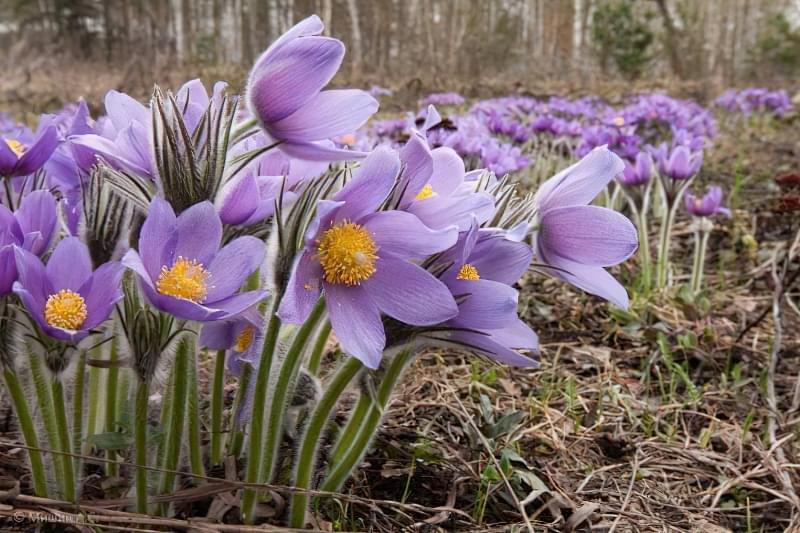 Красиві польові і лугові квіти: жовті, білі, сині, рожеві, фіолетові 39
