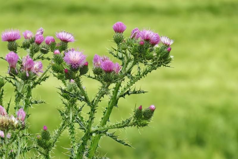 Красиві польові і лугові квіти: жовті, білі, сині, рожеві, фіолетові 40