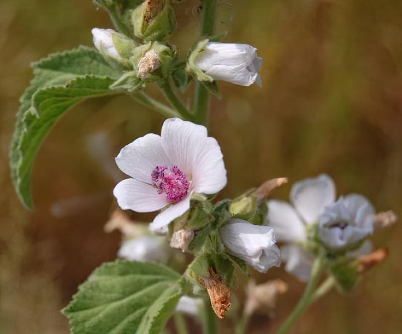 Красиві польові і лугові квіти: жовті, білі, сині, рожеві, фіолетові 45