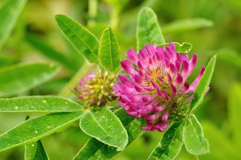 Красиві польові і лугові квіти: жовті, білі, сині, рожеві, фіолетові 49