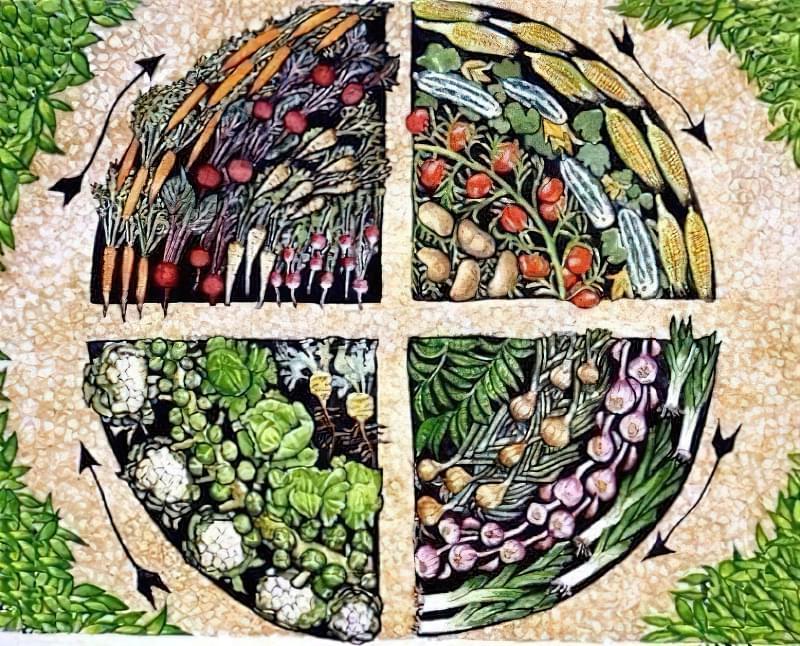 Що посадити після збирання часнику і цибулі 1